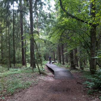 najlepsze-trasy-rowerowe-na-warmii-mazurach-podlasiu-trasa-rowerowa-wokol-jeziora-wigry-jezioro-wigry-lesna-sciezka300x300px