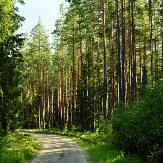 najlepsze-trasy-rowerowe-na-slasku-i-w-malopolsce-lesno-rajza-sklep-sportowo-turystyczny-sportbazar.pl-600x600px